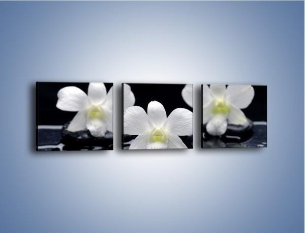 Obraz na płótnie – Biel w kwiecie nocą – trzyczęściowy K512W1