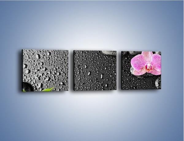 Obraz na płótnie – Oddalone części kwiatów – trzyczęściowy K522W1