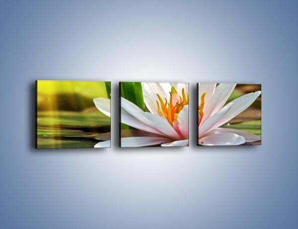 Obraz na płótnie – Lilia wodna w pełni – trzyczęściowy K568W1