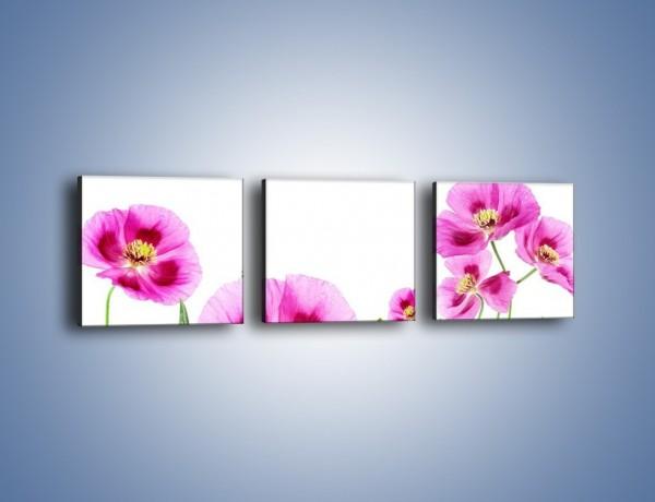 Obraz na płótnie – Maki w kolorze fioletu – trzyczęściowy K571W1