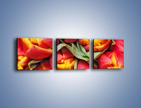 Obraz na płótnie – Tulipany papuzie – trzyczęściowy K573W1