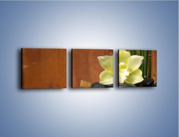 Obraz na płótnie – Kwiat na liściach paproci – trzyczęściowy K577W1