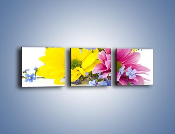 Obraz na płótnie – Niezapominajki wśród kwiatów – trzyczęściowy K604W1