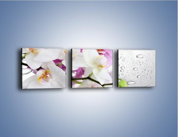 Obraz na płótnie – Kwiaty na mokrej szybie – trzyczęściowy K617W1