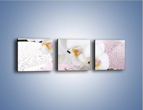 Obraz na płótnie – Czysta biel kwiata po deszczu – trzyczęściowy K618W1