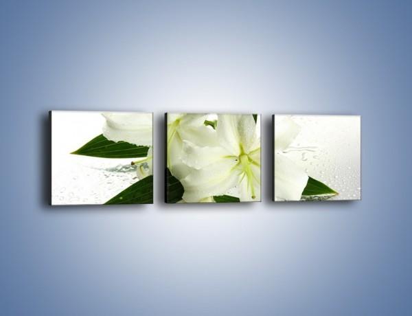 Obraz na płótnie – Niewinność białej lilii – trzyczęściowy K632W1