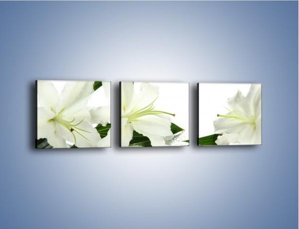 Obraz na płótnie – Czysta biel kwiatów – trzyczęściowy K633W1