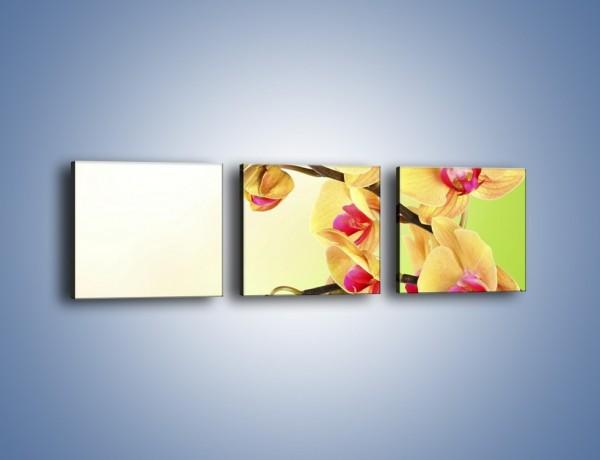 Obraz na płótnie – Kwiat na limonkowym tle – trzyczęściowy K650W1