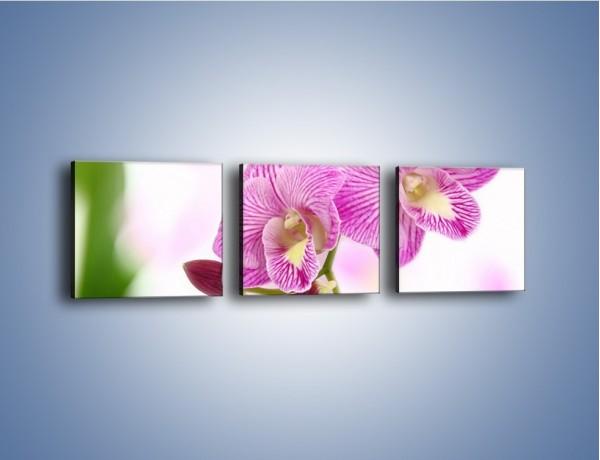 Obraz na płótnie – Kwiat pełen pasji – trzyczęściowy K689W1