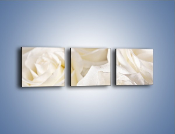 Obraz na płótnie – Dywan z białych róż – trzyczęściowy K711W1