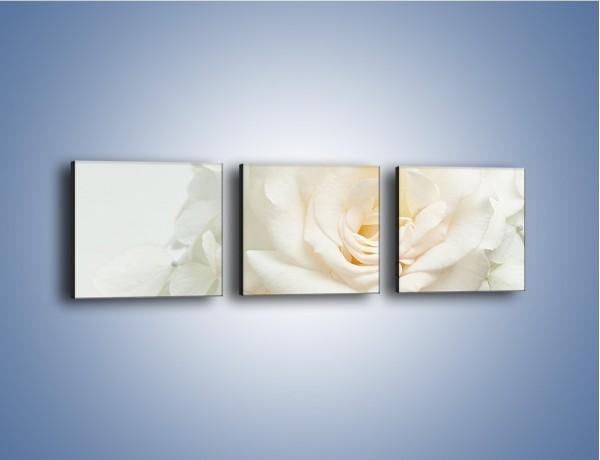 Obraz na płótnie – Czysta biel kwiatów – trzyczęściowy K712W1