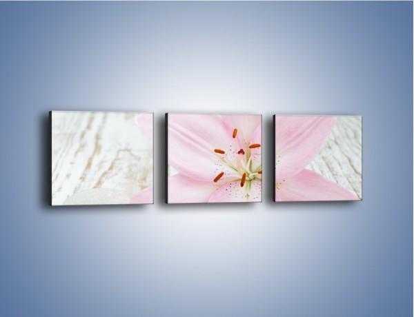 Obraz na płótnie – Cała słodycz w lilii – trzyczęściowy K727W1