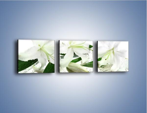 Obraz na płótnie – Życie lilii po deszczu – trzyczęściowy K729W1