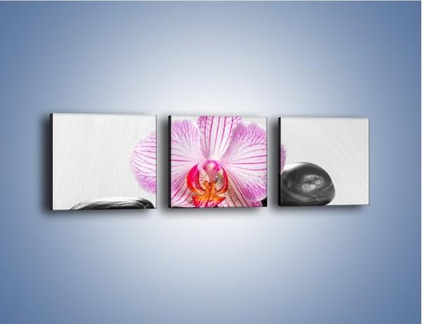 Obraz na płótnie – Kwiatowy motyw – trzyczęściowy K734W1