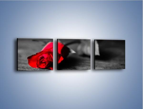 Obraz na płótnie – Tęsknota wyrażona kwiatem – trzyczęściowy K748W1