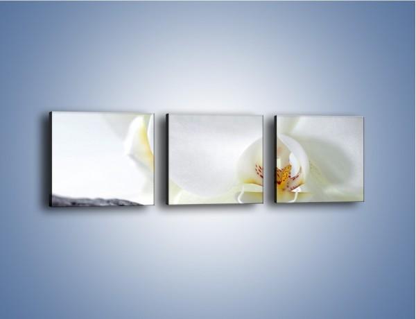 Obraz na płótnie – Laski wanilii i kwiat – trzyczęściowy K750W1
