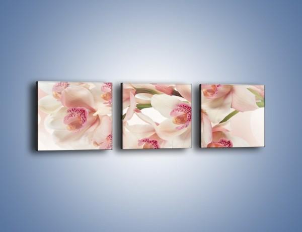 Obraz na płótnie – Szlachetne różowe storczyki – trzyczęściowy K756W1