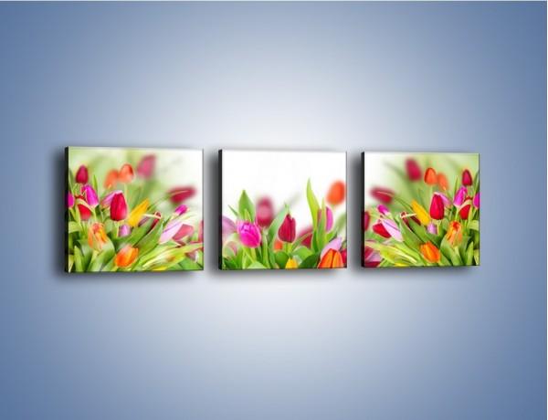 Obraz na płótnie – Tulipanowe bukieciki – trzyczęściowy K763W1