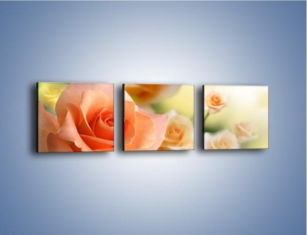 Obraz na płótnie – Dzikie róże w ogrodzie – trzyczęściowy K764W1