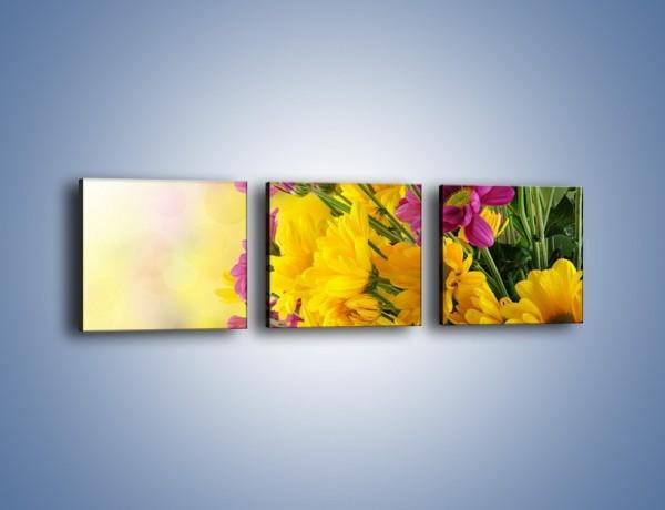 Obraz na płótnie – Kolorowe margaretki – trzyczęściowy K766W1