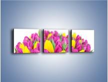 Obraz na płótnie – Bukiet fioletowo-żółtych tulipanów – trzyczęściowy K778W1