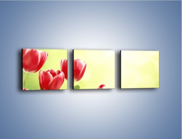 Obraz na płótnie – Polne tulipany i stokrotki – trzyczęściowy K789W1