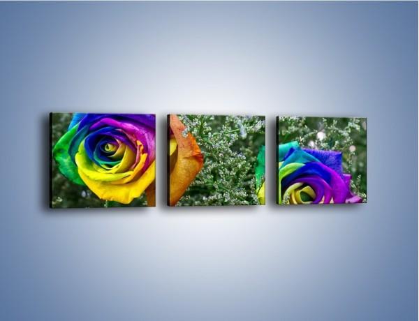 Obraz na płótnie – Kolorowe różane główki – trzyczęściowy K800W1