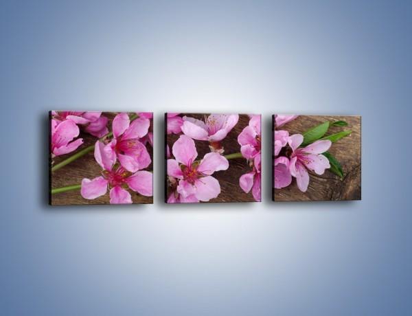 Obraz na płótnie – Kwiat wiśni z bliska – trzyczęściowy K806W1