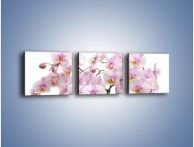 Obraz na płótnie – Cieniutkie gałązki storczyków – trzyczęściowy K813W1