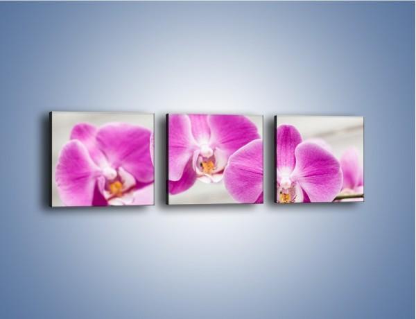 Obraz na płótnie – Kwiat o mocnym charakterze – trzyczęściowy K814W1