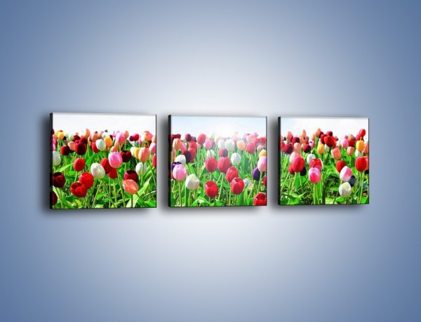 Obraz na płótnie – Tulipany w podniebnym oceanie – trzyczęściowy K830W1