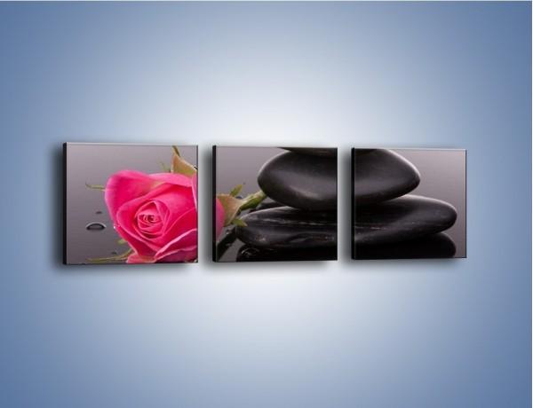 Obraz na płótnie – Róża schowana za kamieniem – trzyczęściowy K833W1