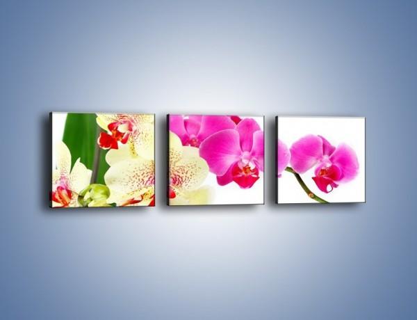 Obraz na płótnie – Wszystkie kolory storczyka – trzyczęściowy K834W1