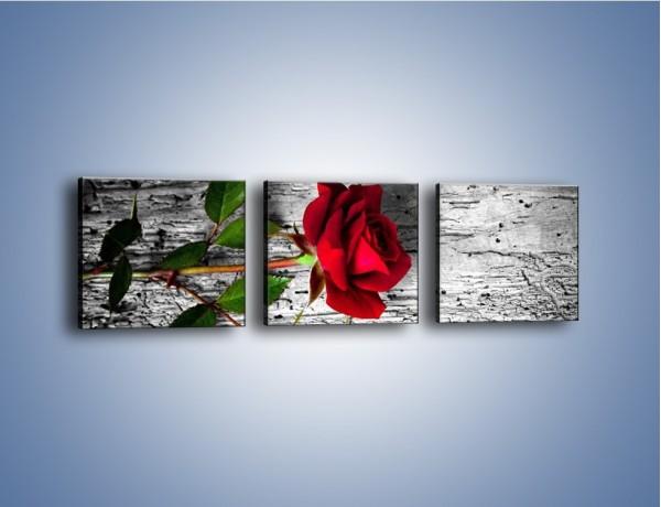 Obraz na płótnie – Róża na surowym tle – trzyczęściowy K843W1
