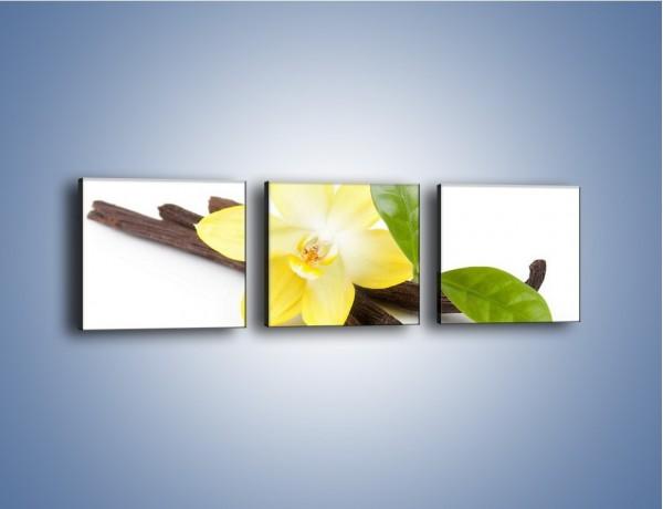 Obraz na płótnie – Samotny kwiat i dodatki – trzyczęściowy K849W1