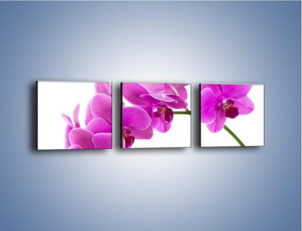 Obraz na płótnie – Kwiaty w lewą stronę – trzyczęściowy K853W1