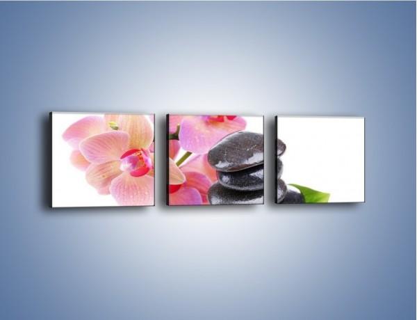 Obraz na płótnie – Kamień liść czy kwiaty – trzyczęściowy K856W1