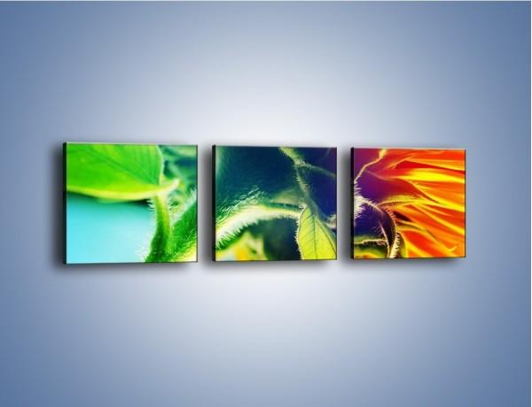 Obraz na płótnie – Twarda łodyga słonecznika – trzyczęściowy K866W1
