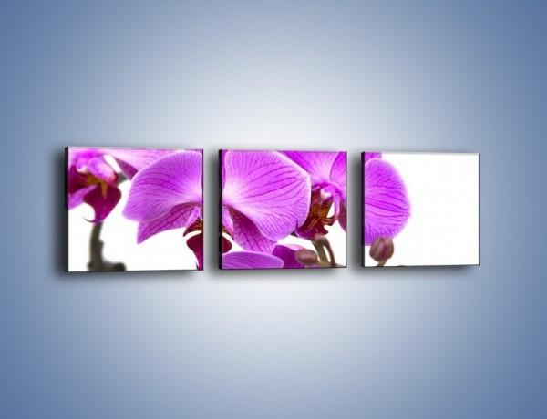 Obraz na płótnie – Samotne kwiaty bez dodatków – trzyczęściowy K870W1