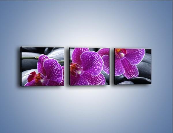 Obraz na płótnie – Nie tylko kwiaty – trzyczęściowy K884W1