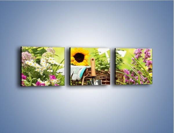 Obraz na płótnie – Sezon na działkowe kwiatki – trzyczęściowy K917W1