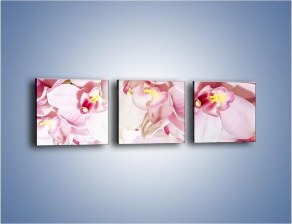 Obraz na płótnie – Pejzaż kwiatowy od góry – trzyczęściowy K936W1