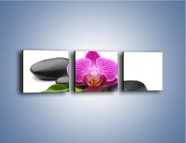 Obraz na płótnie – Kwiat i jego liście – trzyczęściowy K941W1