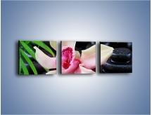 Obraz na płótnie – Cudny kwiat na pierwszym planie – trzyczęściowy K951W1