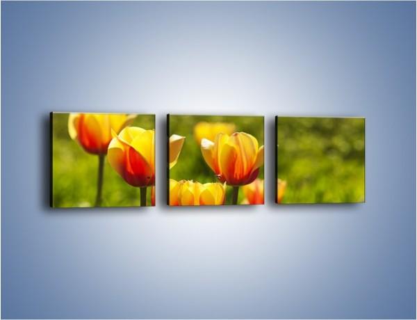 Obraz na płótnie – Pomarańczowe kwiaty i zieleń – trzyczęściowy K952W1