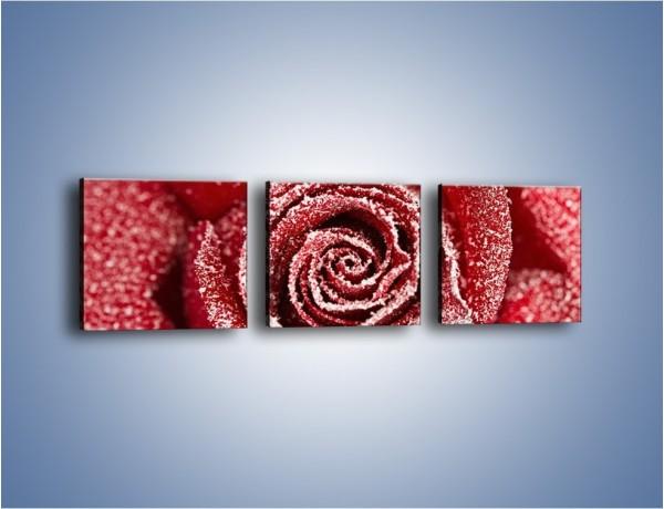Obraz na płótnie – Szron na różanych płatkach – trzyczęściowy K958W1