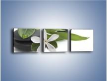 Obraz na płótnie – Artystyczna kompozycja z kwiatem – trzyczęściowy K968W1
