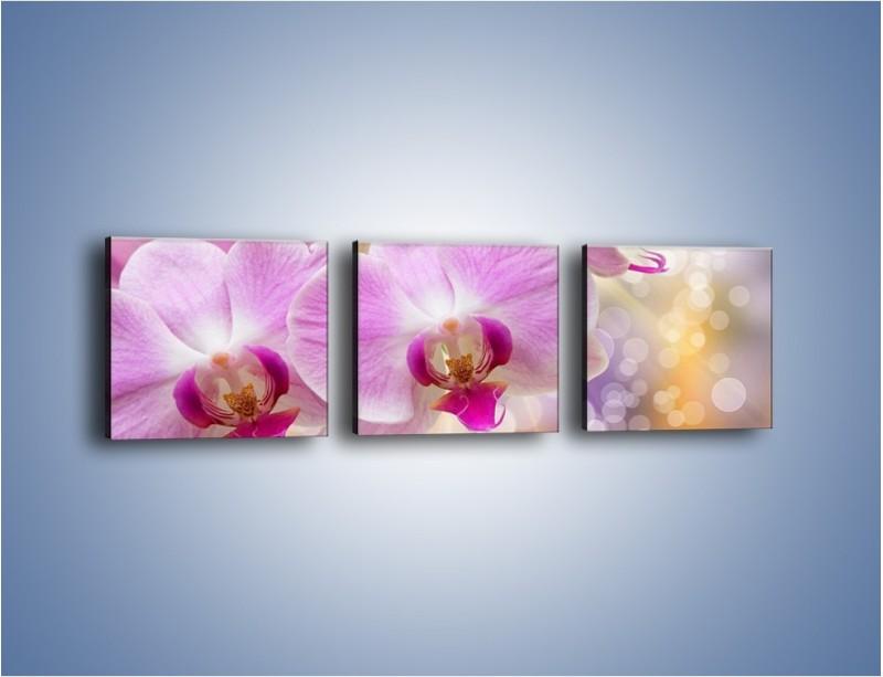 Obraz na płótnie – Lila kwiaty o poranku – trzyczęściowy K976W1