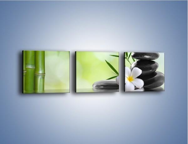 Obraz na płótnie – Kwiat w zielonym odbiciu – trzyczęściowy K984W1