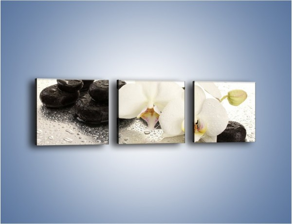 Obraz na płótnie – Mokre kwiaty i kamienie – trzyczęściowy K986W1